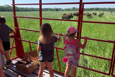 Deux jeunes filles regardent les bisons dans les champs, à partir d'un wagon