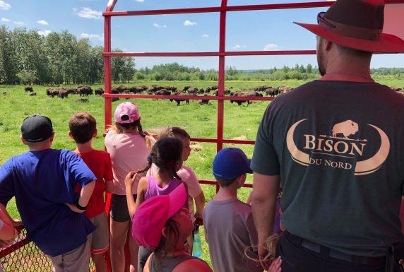 Des étudiants et un guide regardent les bisons dans les champs, à partir d'un wagon